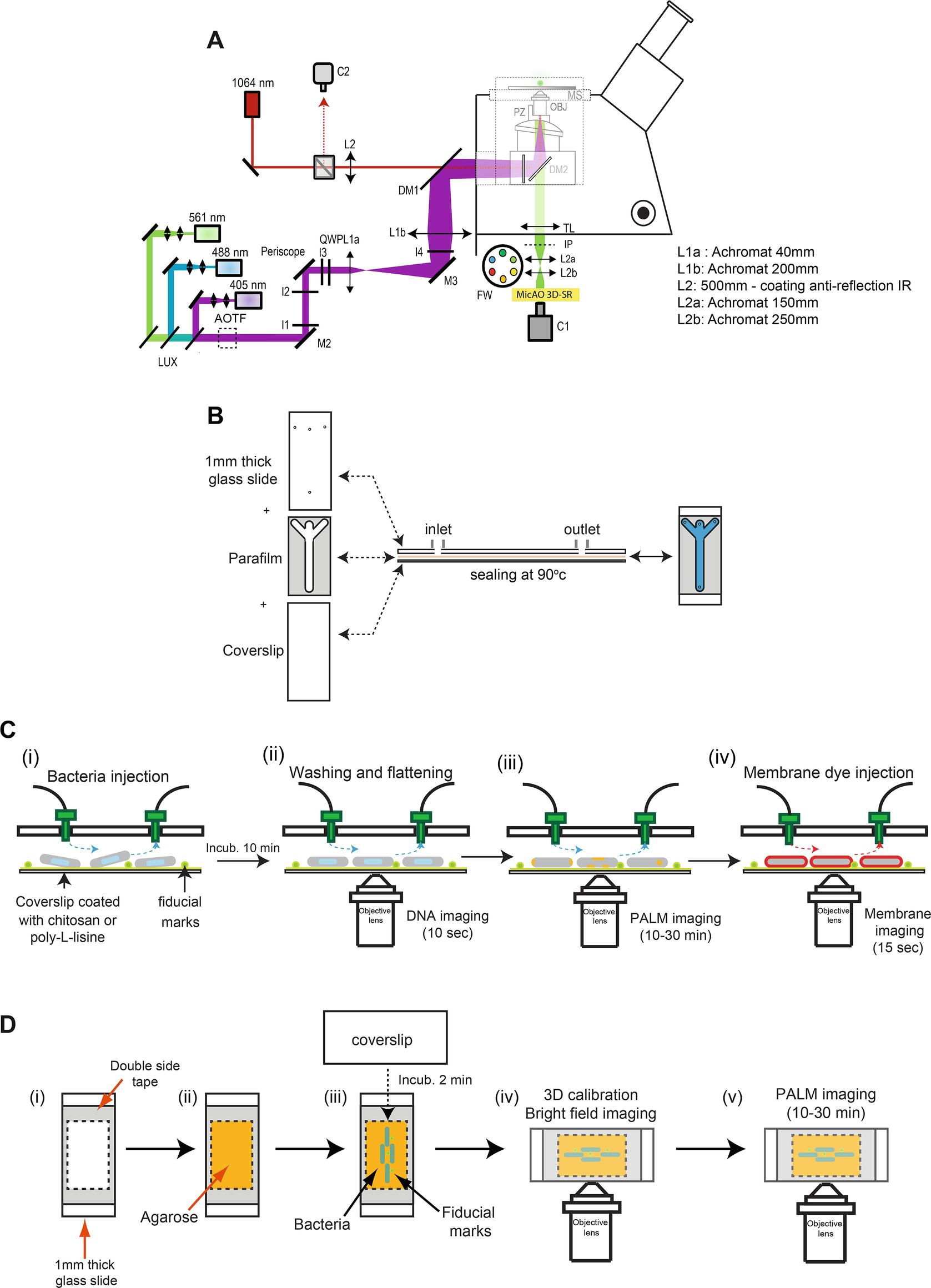 DNA Organization and Superesolved Segregation | SpringerLink