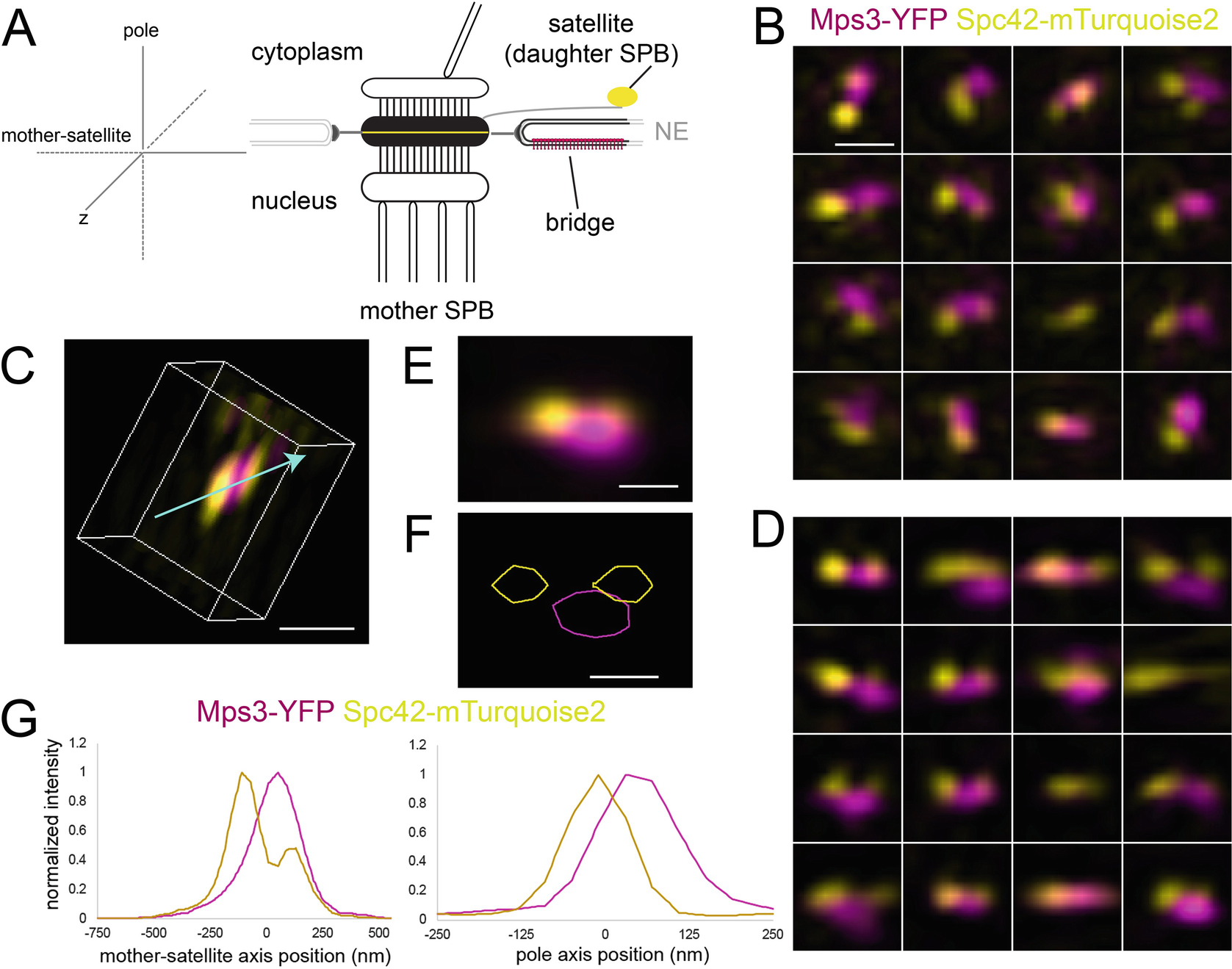 Functional analysis of the yeast linc complex using fluctuation open image in new window fandeluxe Images