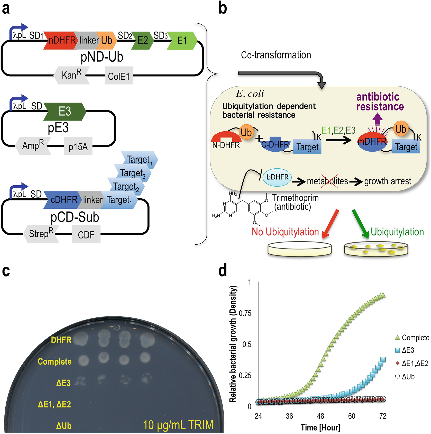 E  coli-Based Selection and Expression Systems for Discovery