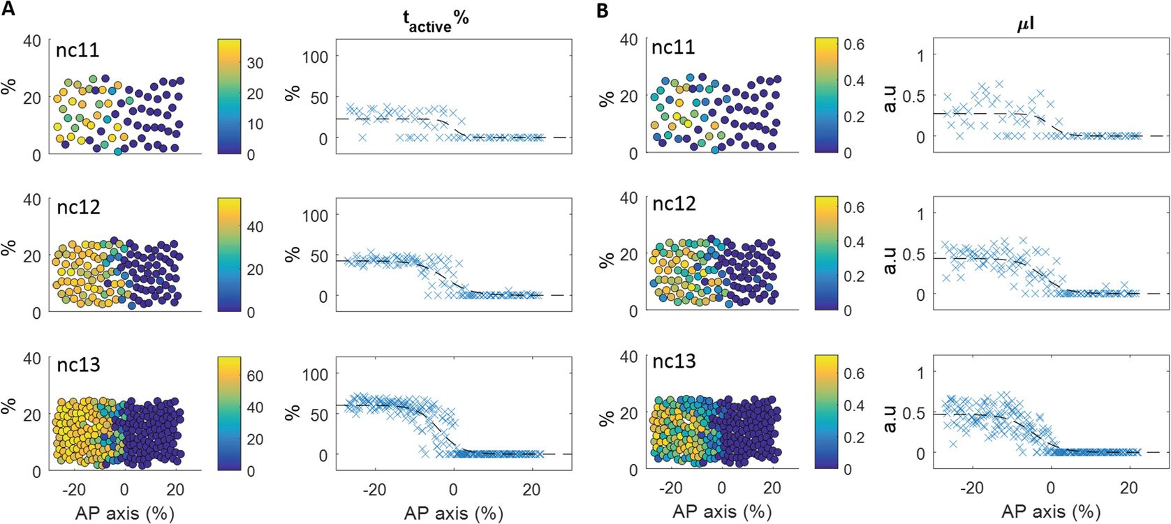 LiveFly: A Toolbox for the Analysis of Transcription Dynamics in
