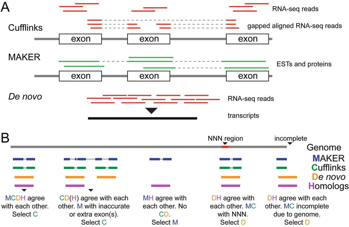 Integrated Modeling of Structural Genes Using MCuNovo | SpringerLink
