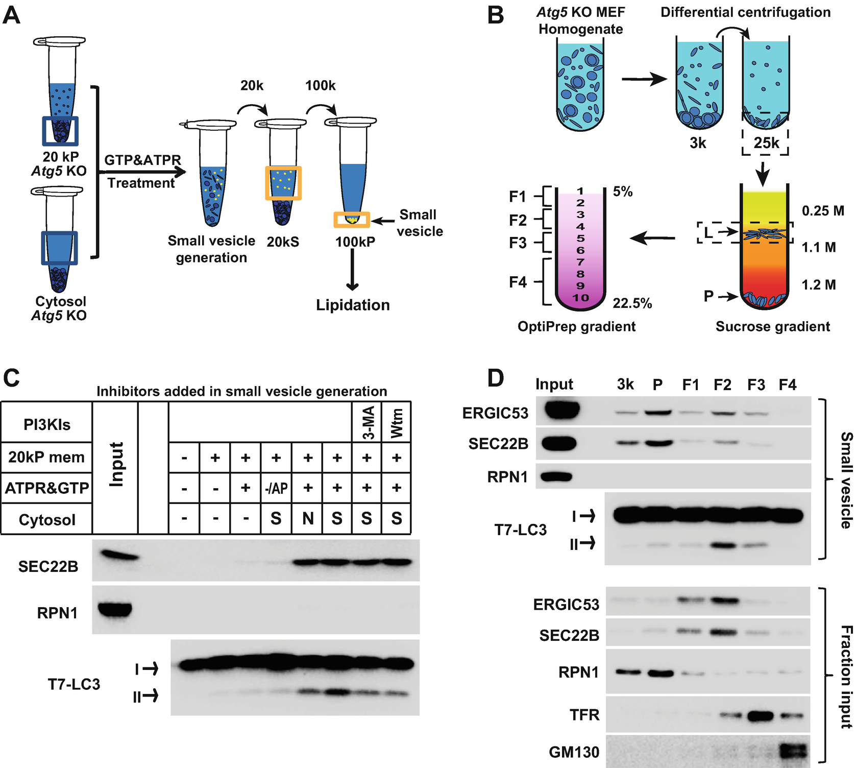 Cell-Free Reconstitution of Autophagic Membrane Formation