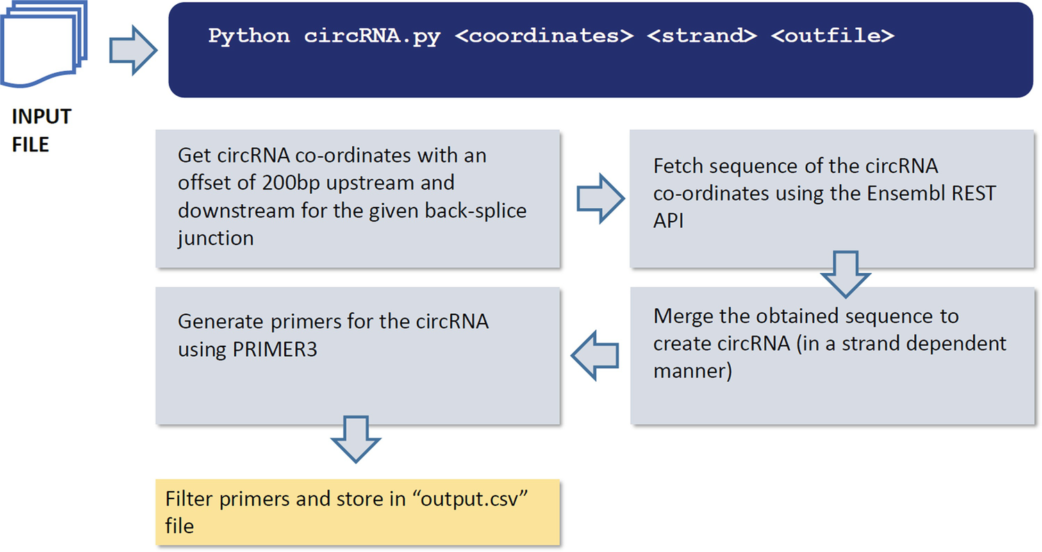 Methods for Annotation and Validation of Circular RNAs from RNAseq