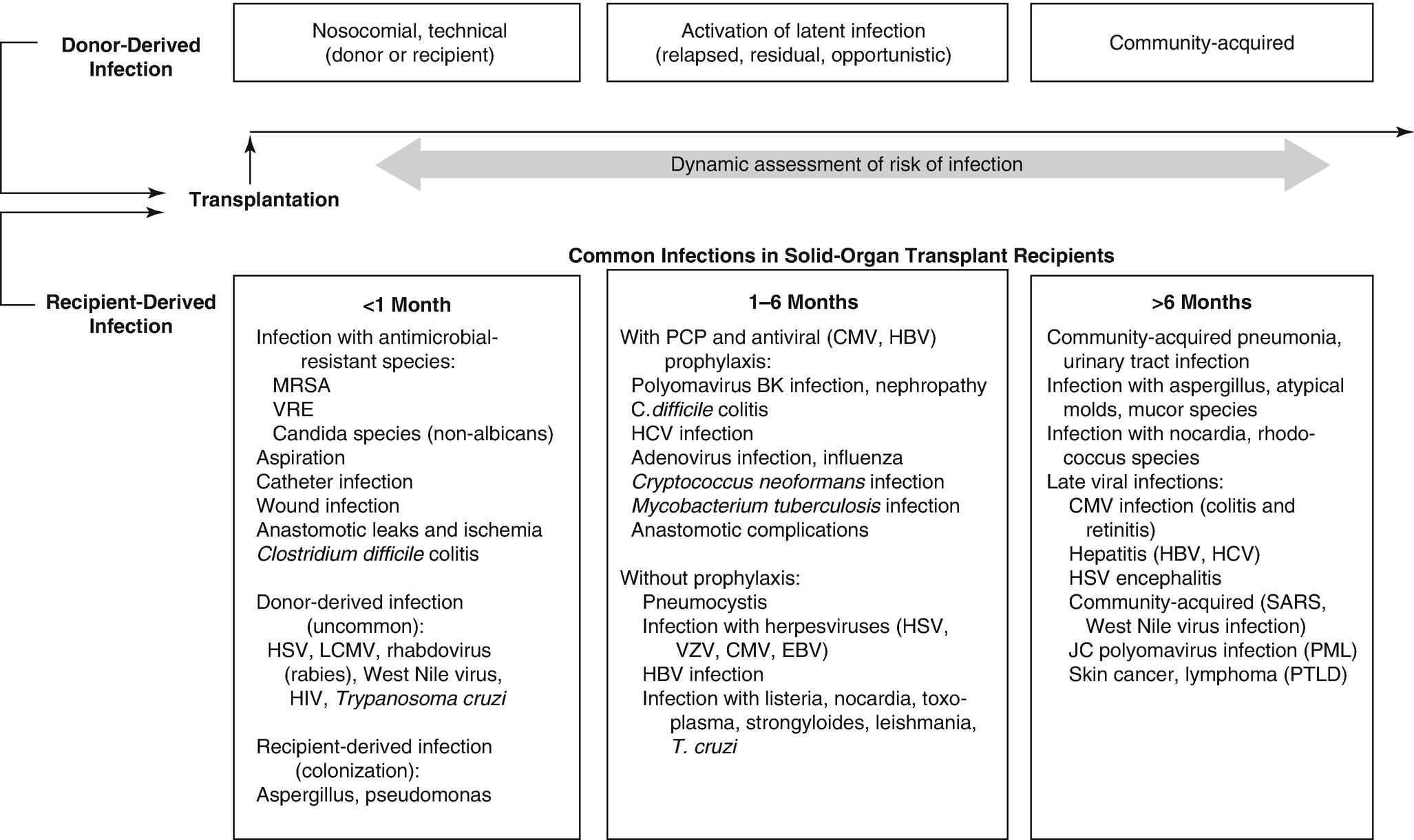 Pharmacokinetics and Pharmacodynamics of Antibiotics in