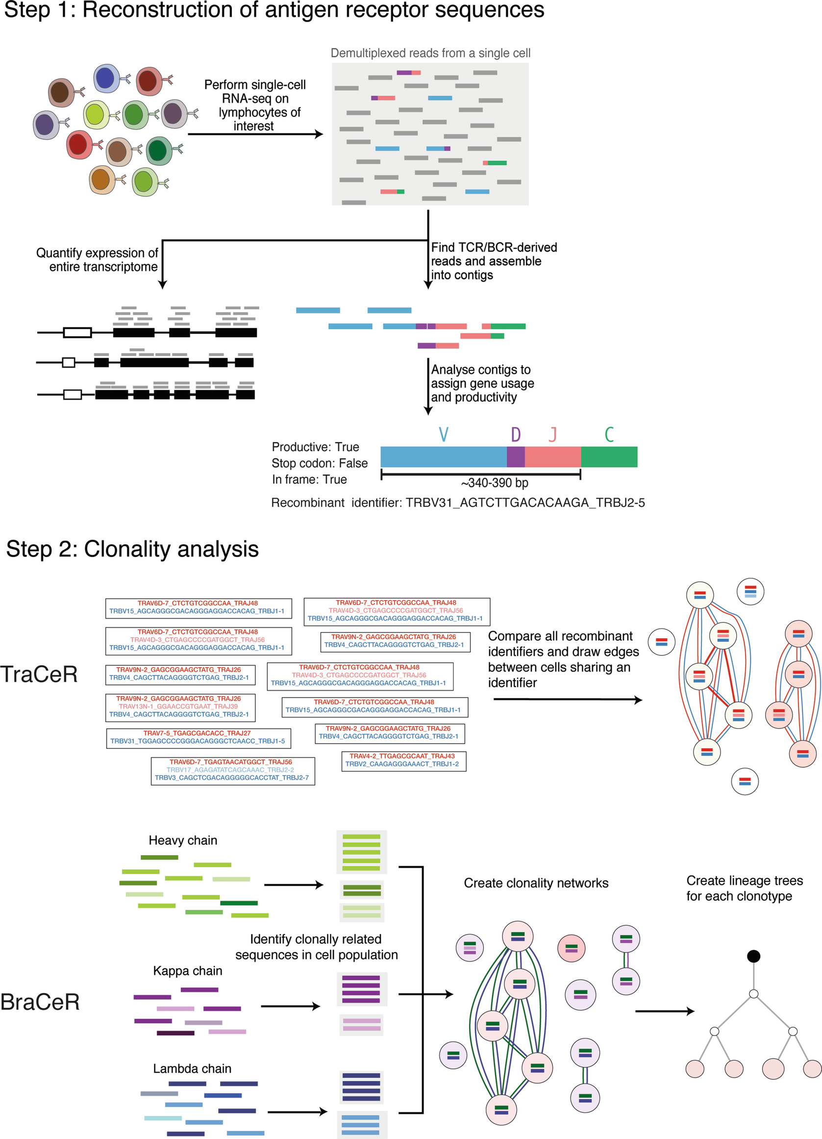 attraktivt pris snygg nytt koncept Antigen Receptor Sequence Reconstruction and Clonality Inference ...