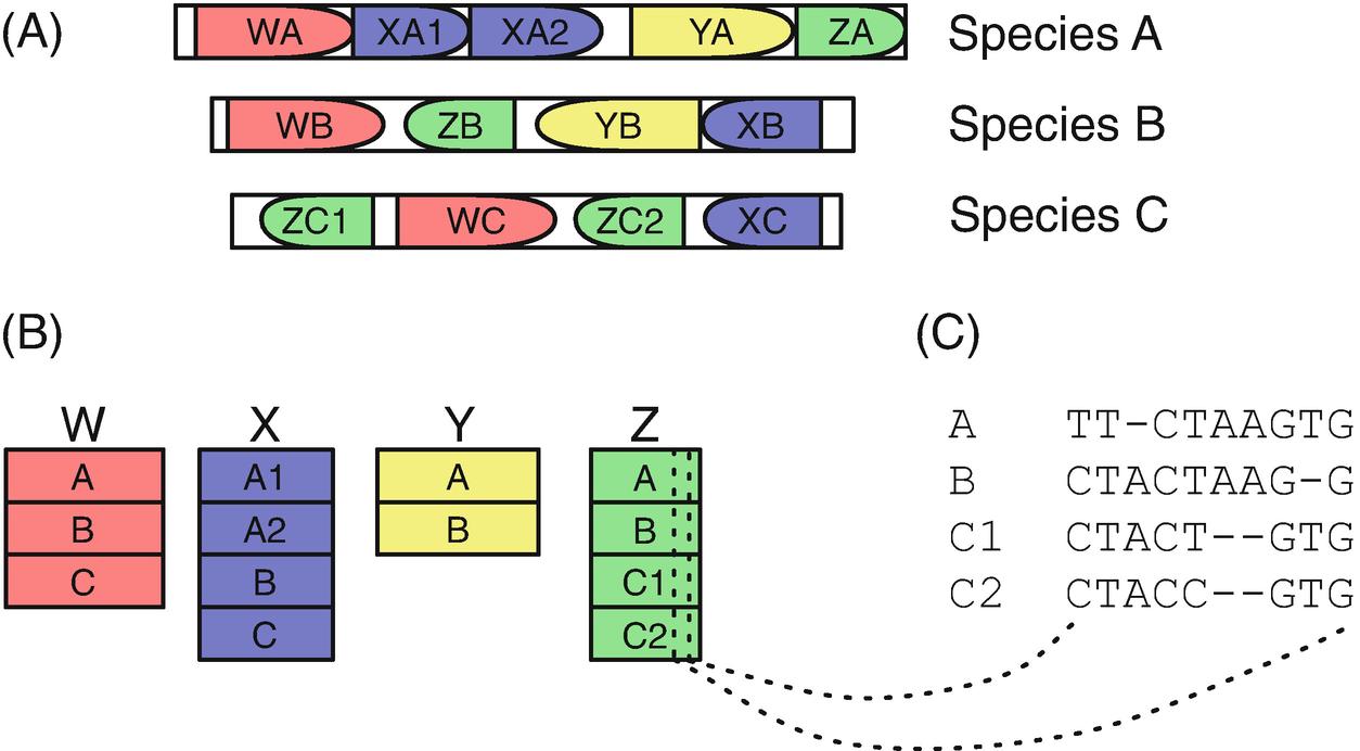 Whole-Genome Alignment | SpringerLink