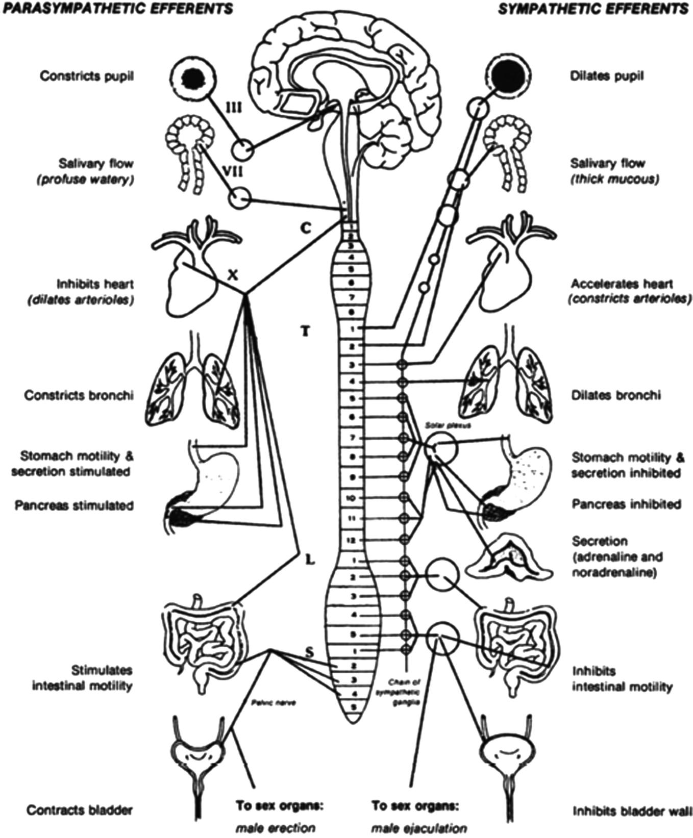 The Anatomy and Physiology of the Human Stress Response