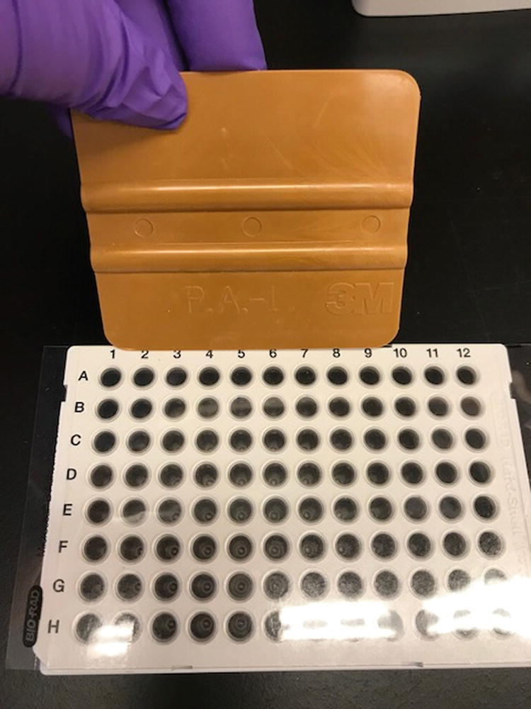 Guidelines for the Detection of NADPH Oxidases by Immunoblot and ...