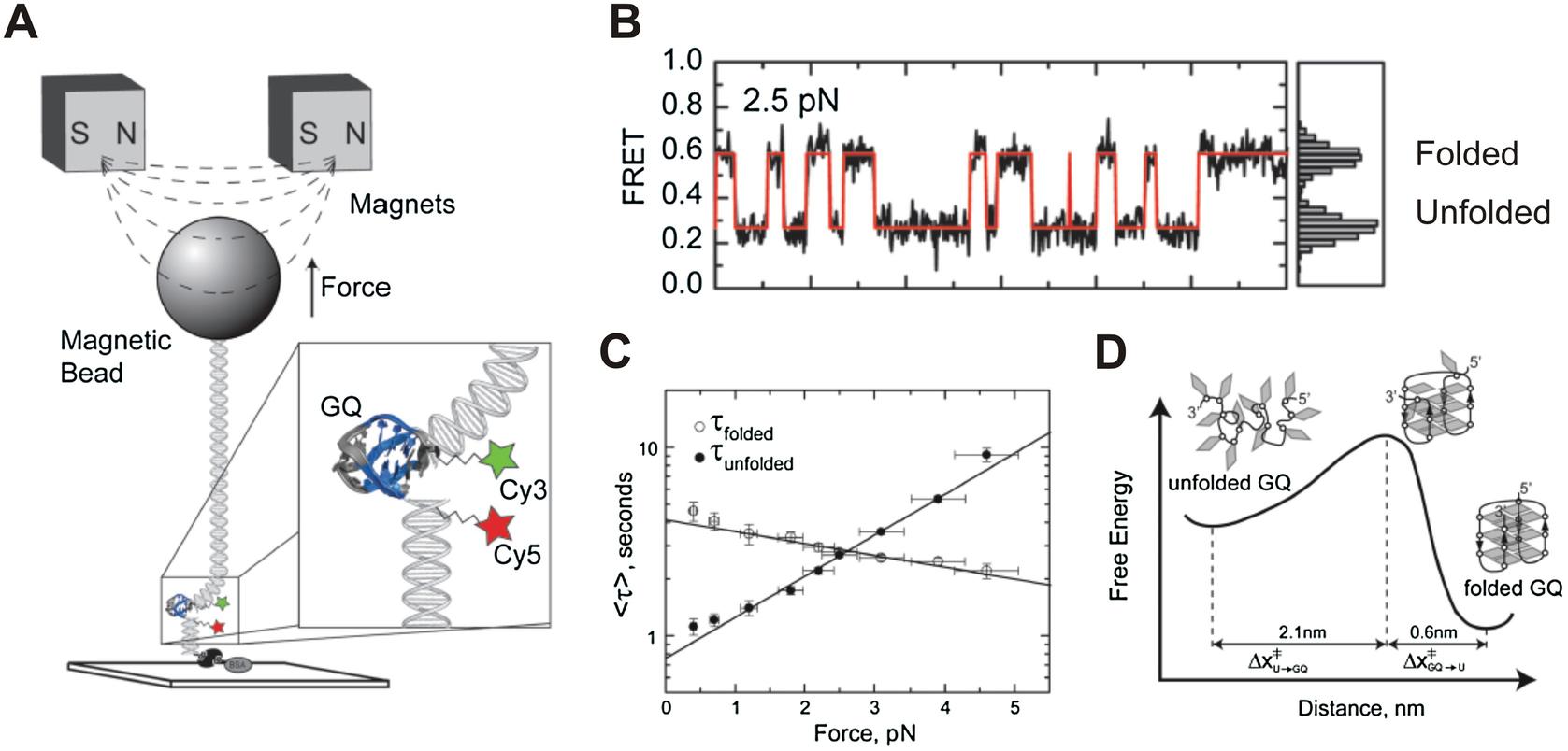Single-Molecule Investigations of G-Quadruplex | SpringerLink