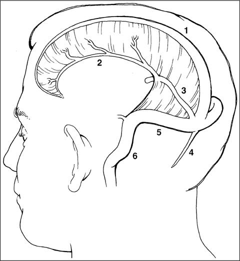 Essential Neurovascular Anatomy
