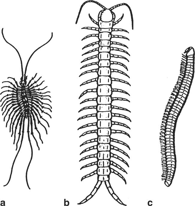 Arthropods and Health | SpringerLink