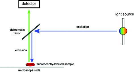 fig  7 3  diagram illustrating the basic principle of epi-fluorescence  microscopy