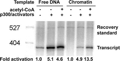 Activator-Dependent Acetylation of Chromatin Model Systems