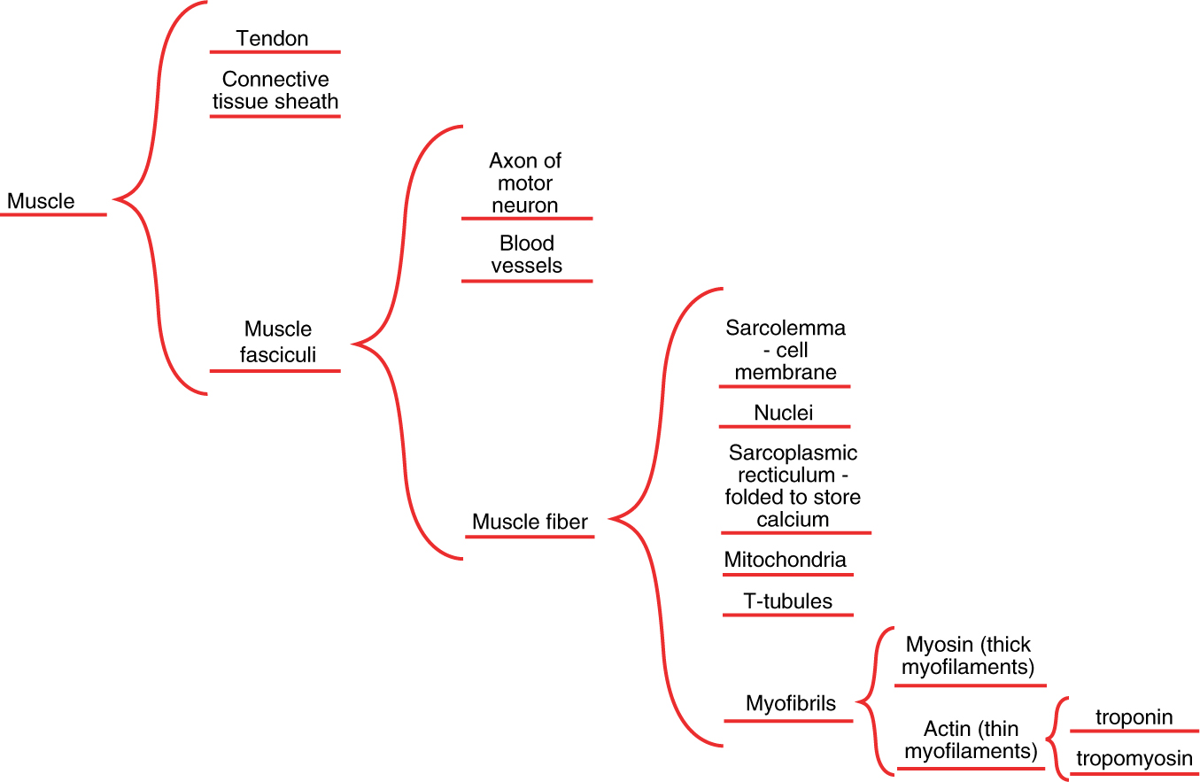 Thinking maps a visual language for learning springerlink open image in new window fandeluxe Images