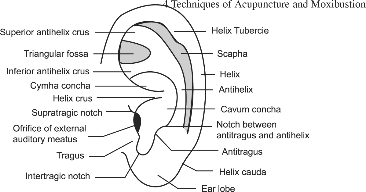 Techniques of acupuncture and moxibustion springerlink fig 438 surface anatomy of ear fandeluxe Images
