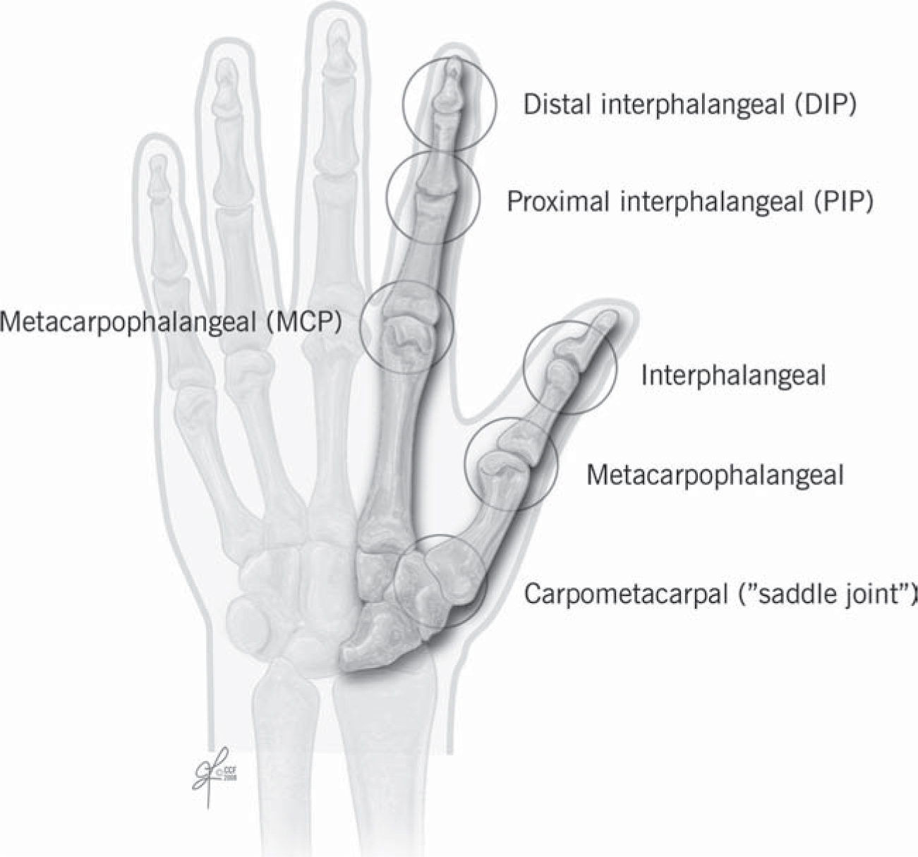 Hand Anatomy And Examination Springerlink
