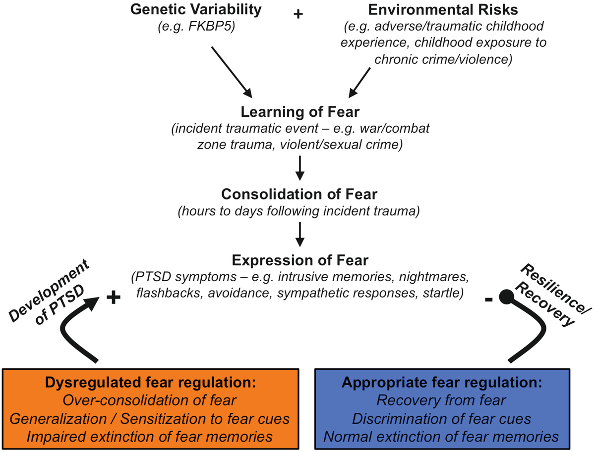 When Trauma Underlies Challenging >> Posttraumatic Stress Disorder From Neurobiology To Cycles Of