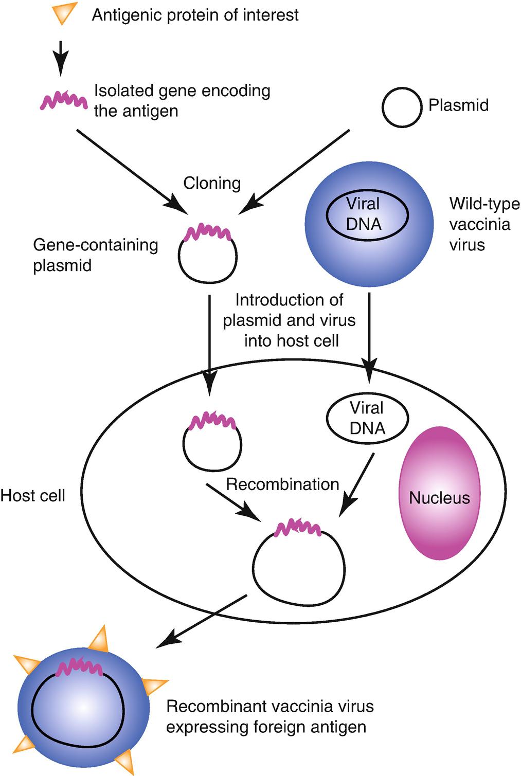 Vaccines | SpringerLink