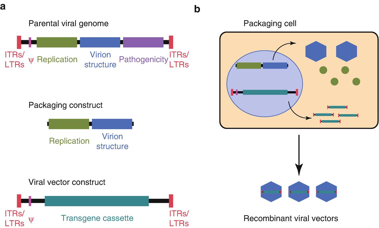 Gene Therapy | SpringerLink