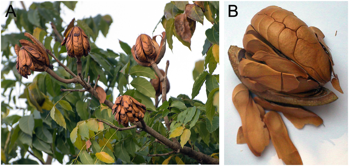 Chemistry And Biology Of Selected Mexican Medicinal Plants