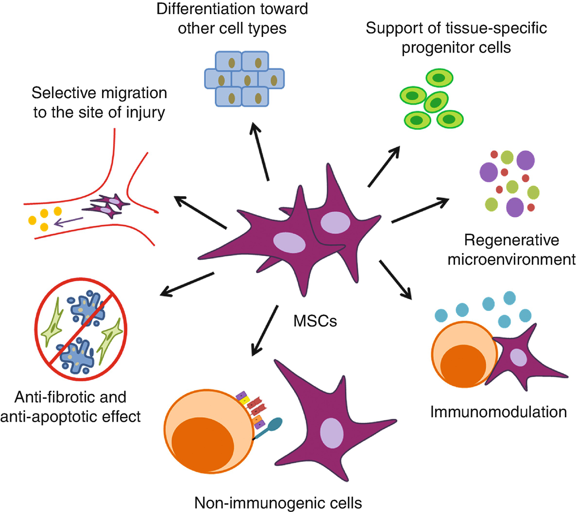 Cell Therapy Using Extraocular Mesenchymal Stem Cells