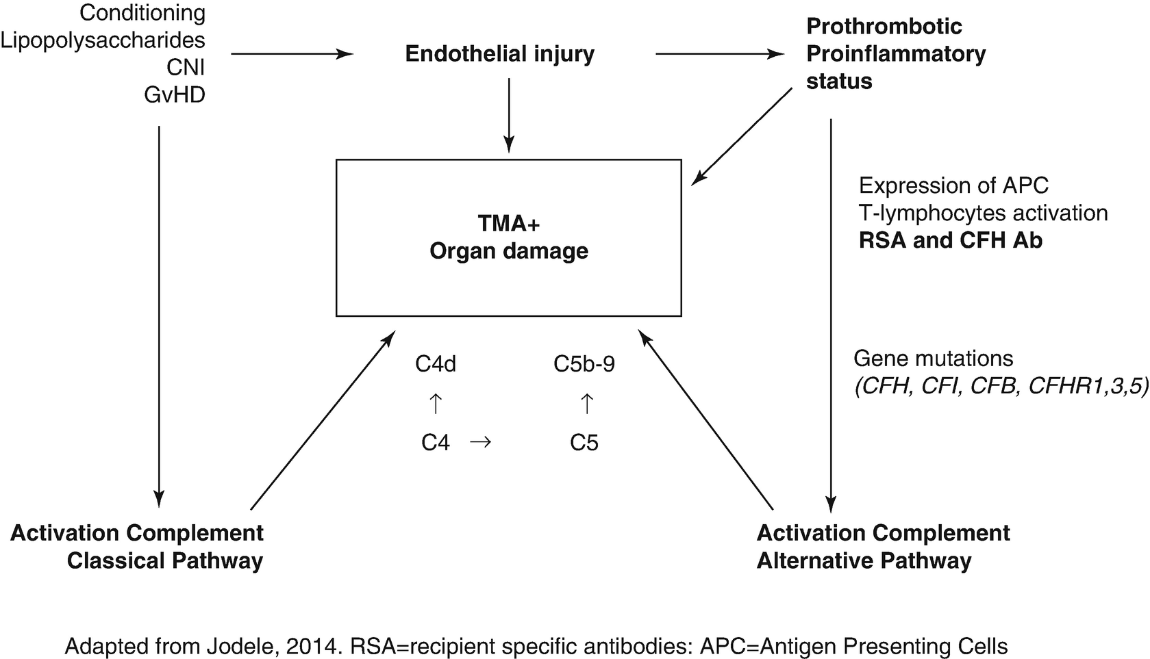 Early Complications of Endothelial Origin | SpringerLink