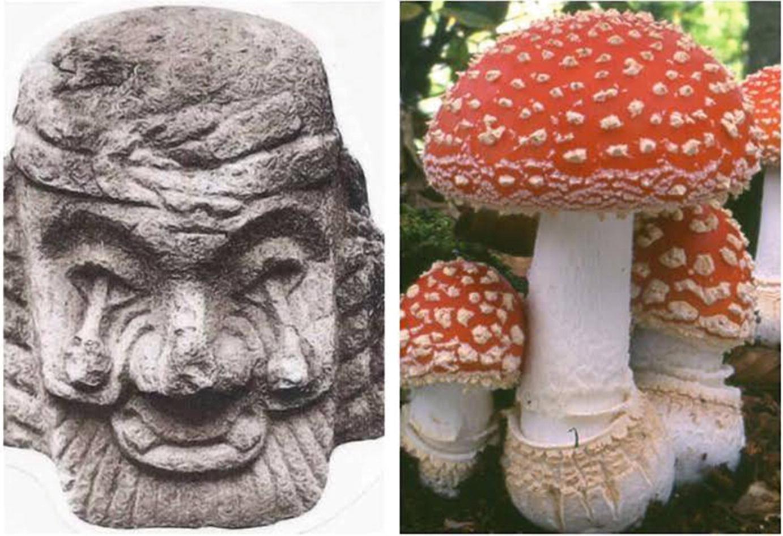 A Global Overview of Edible Mushrooms | SpringerLink