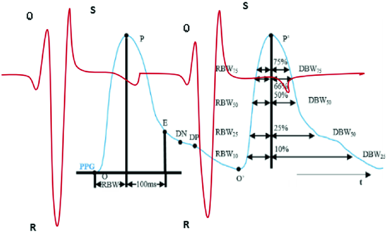 Continuous Blood Pressure Estimation Using PPG and ECG Signal