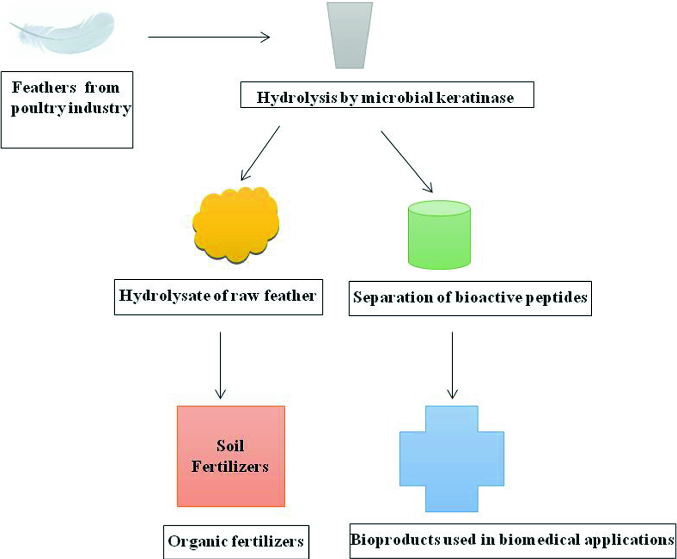 Keratin Production and Its Applications: Current and Future ...
