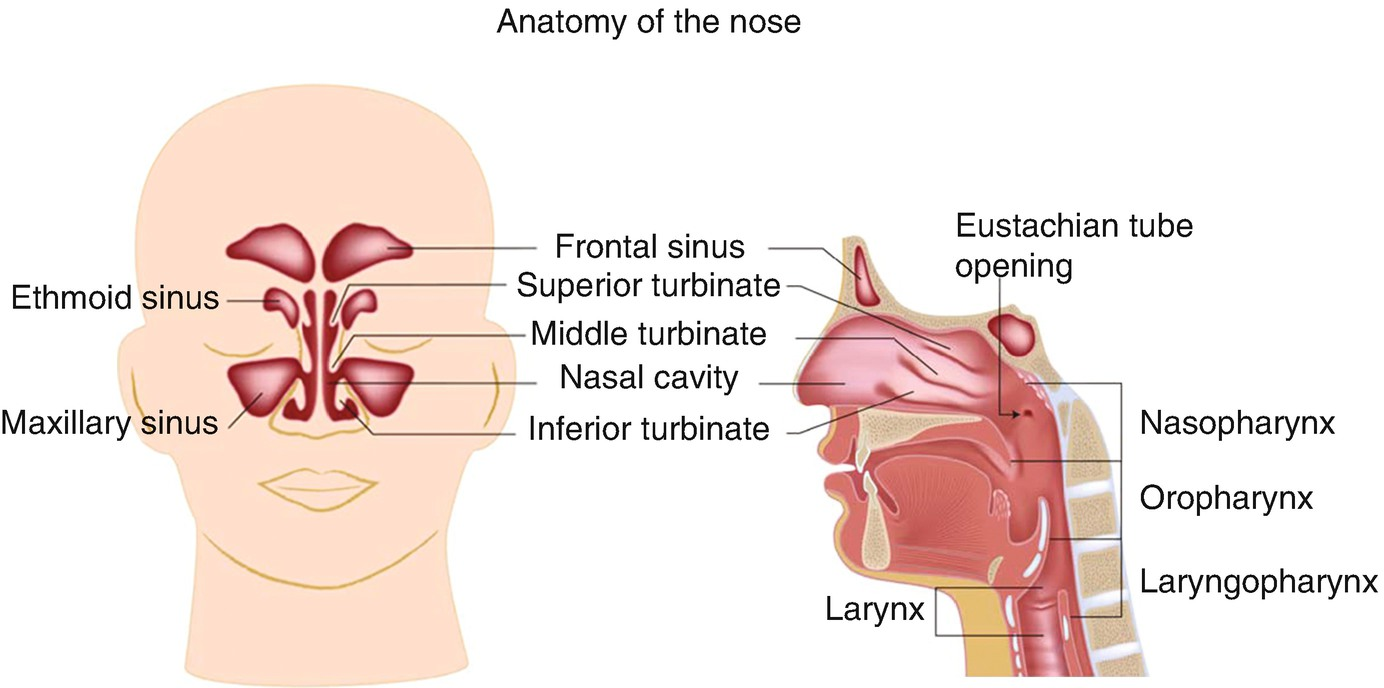 Rhinitis and Sinusitis | SpringerLink