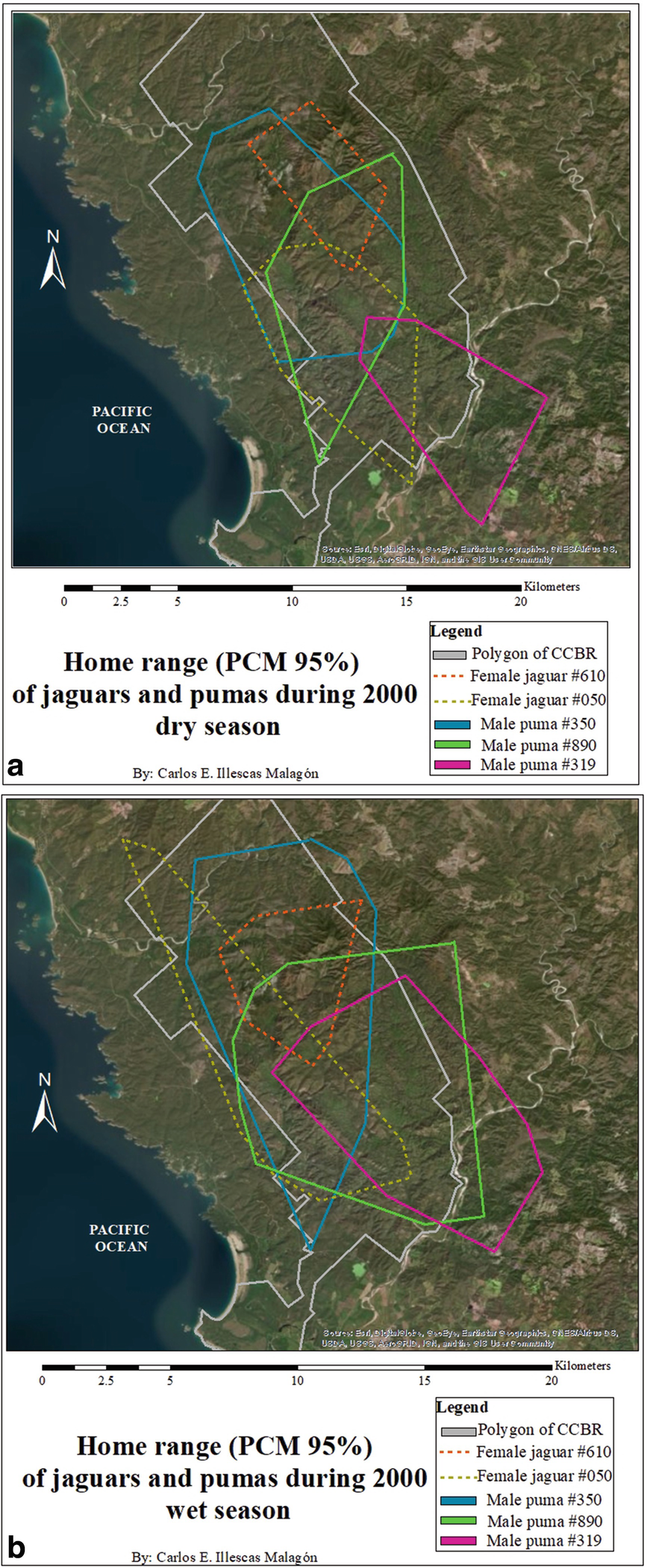 Movements and Home Range of Jaguars ( Panthera onca) and