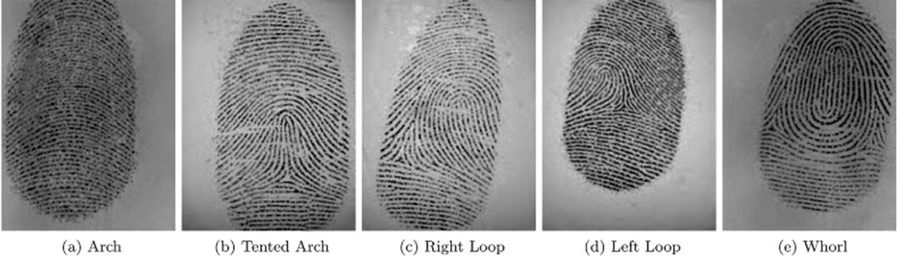 Polyvalent Fingerprint Biometric System for Authentication