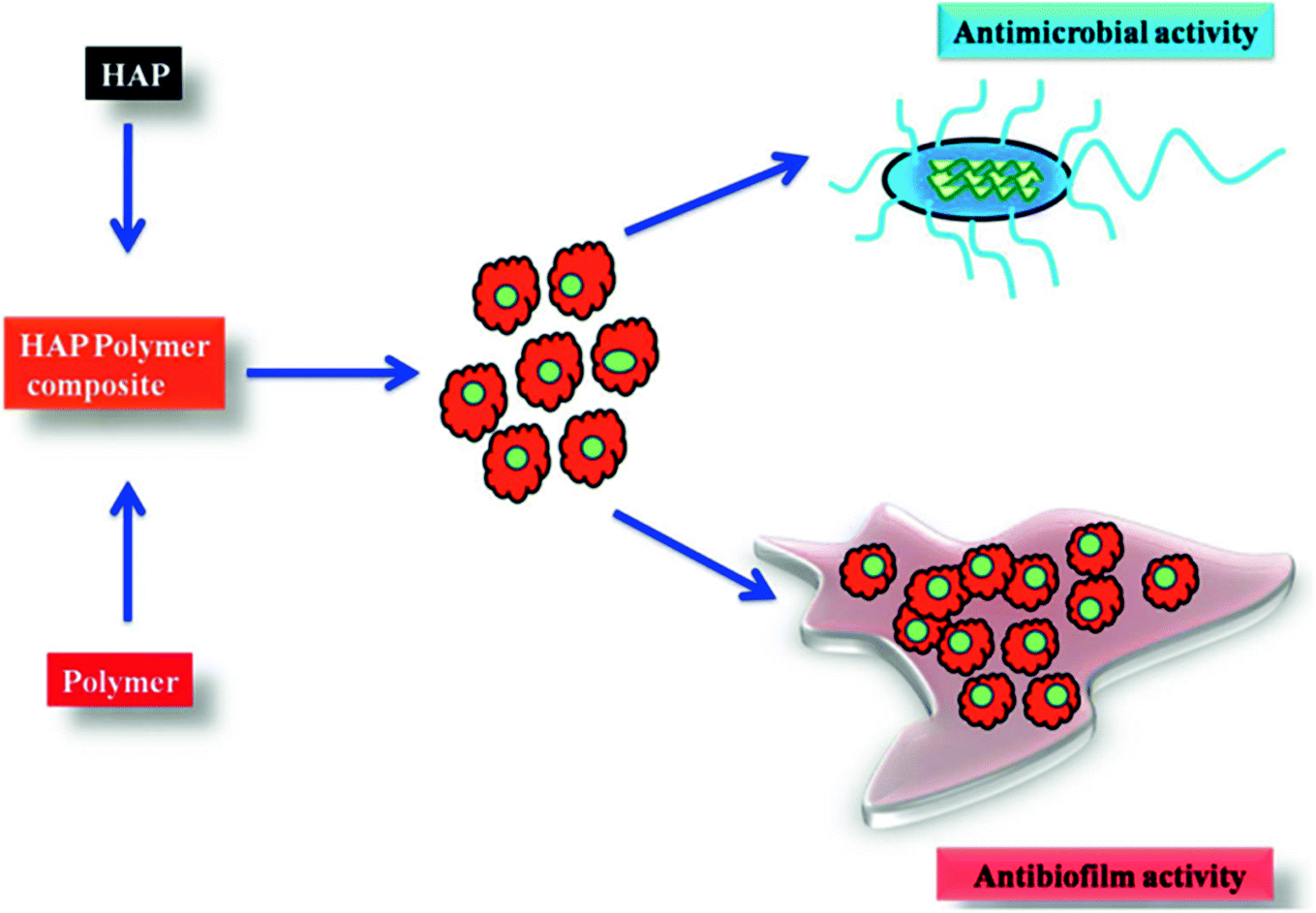 Biomedical Applications of Hydroxyapatite Nanocomposites | SpringerLink