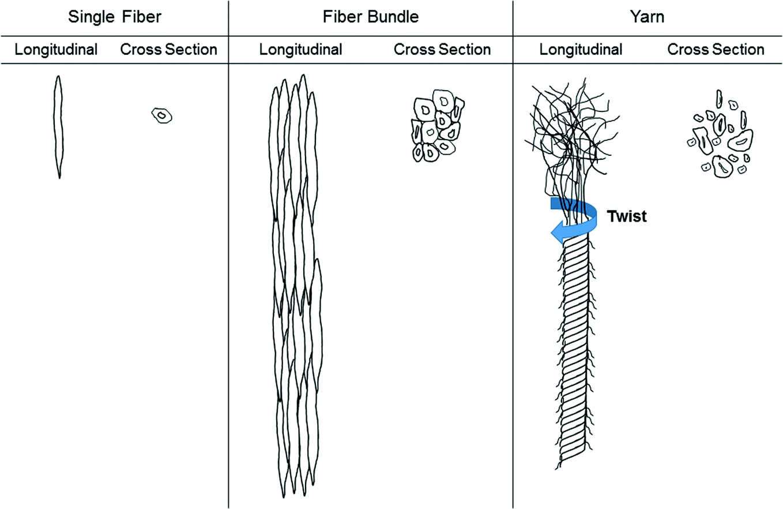 An Overview on Plant Fiber Technology: An Interdisciplinary