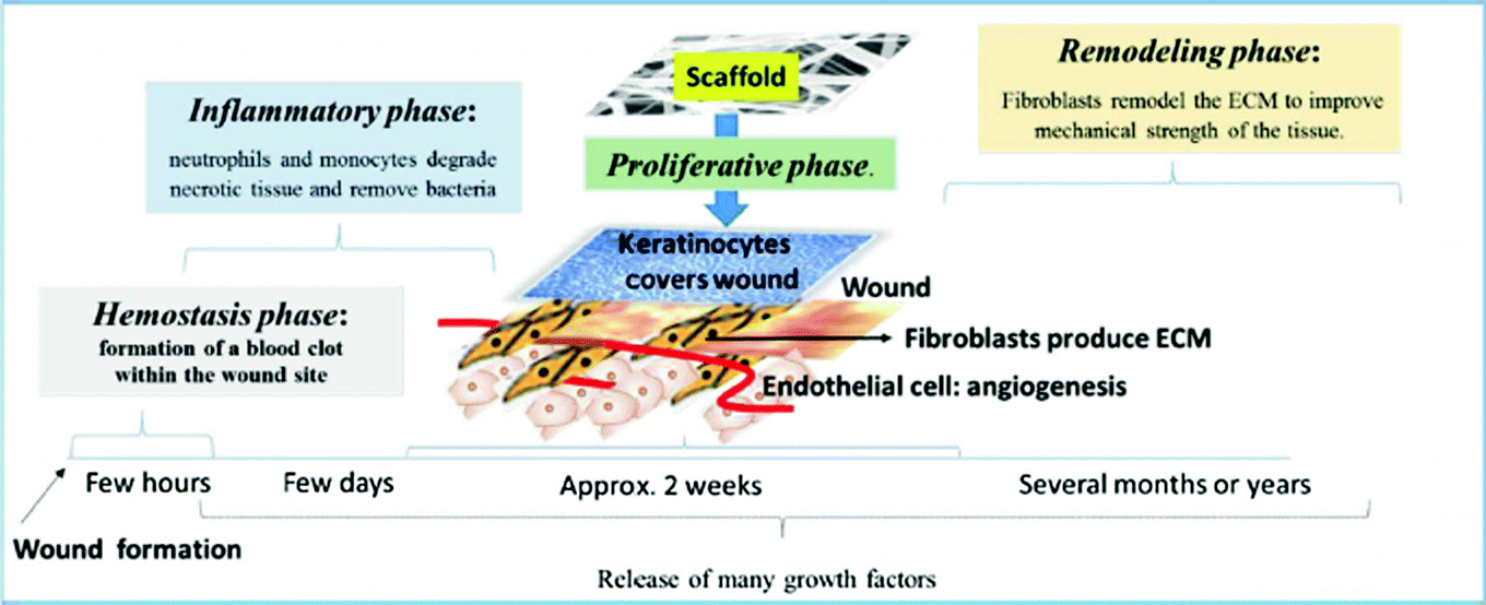 Biocompatible and Biodegradable Chitosan Composites in Wound Healing