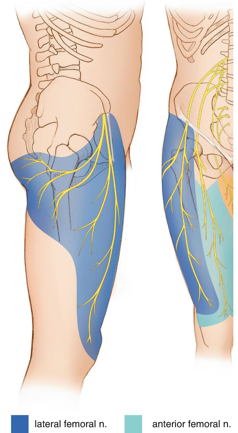 Knee Denervation | SpringerLink