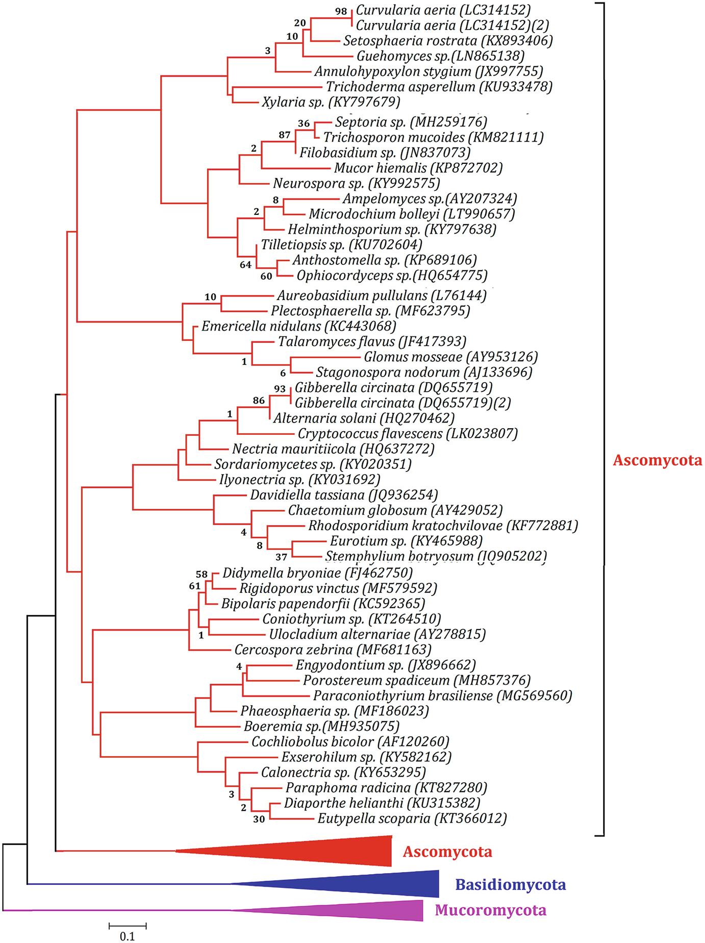 Endophytic Fungi: Biodiversity, Ecological Significance, and