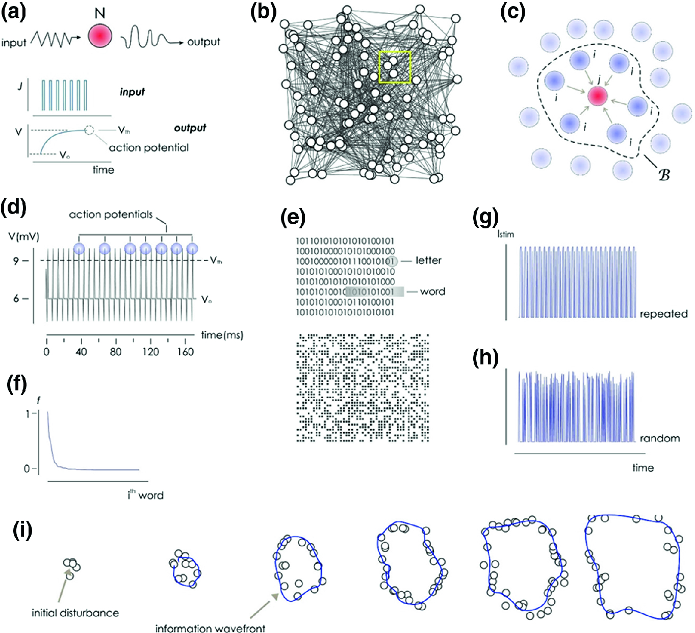 Nanotopographical Control of Cell Assembly into Supracellular