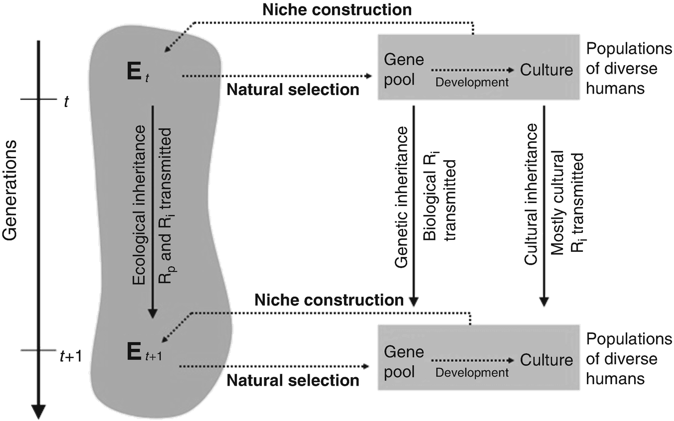 Niche Construction Theory and Human Biocultural Evolution