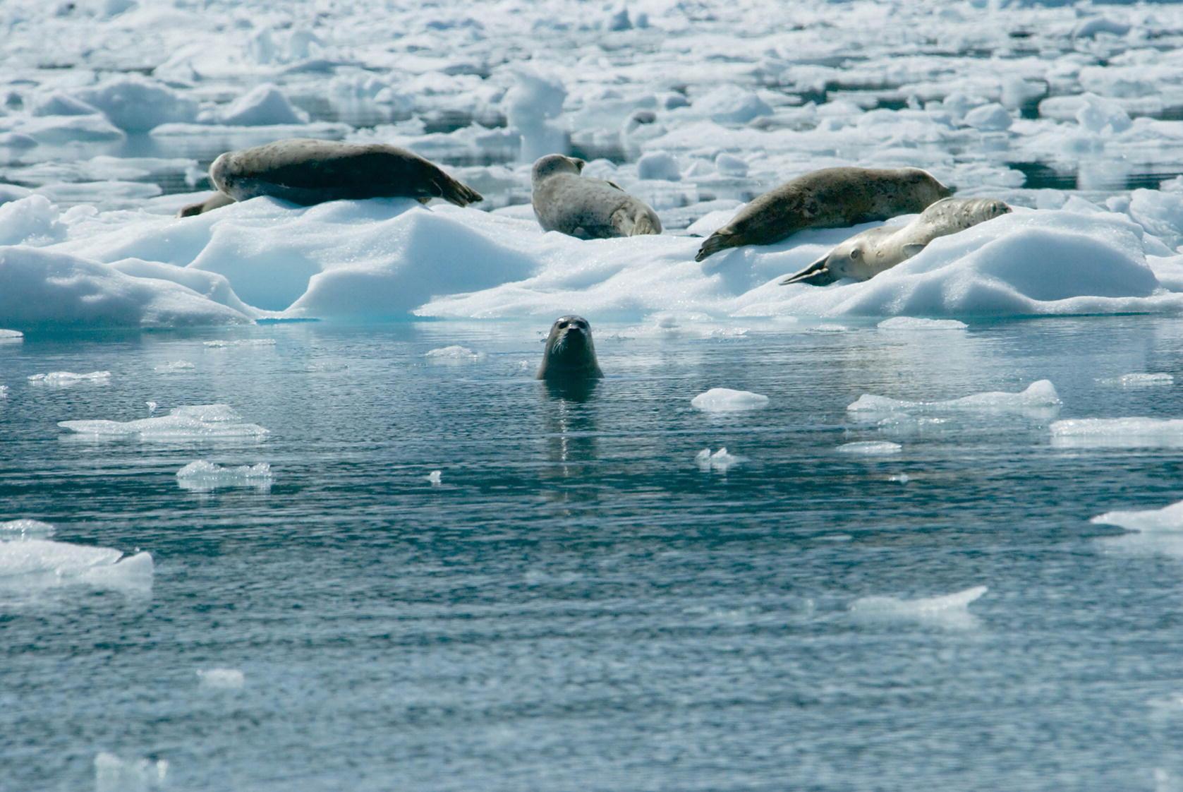polar chasm biome