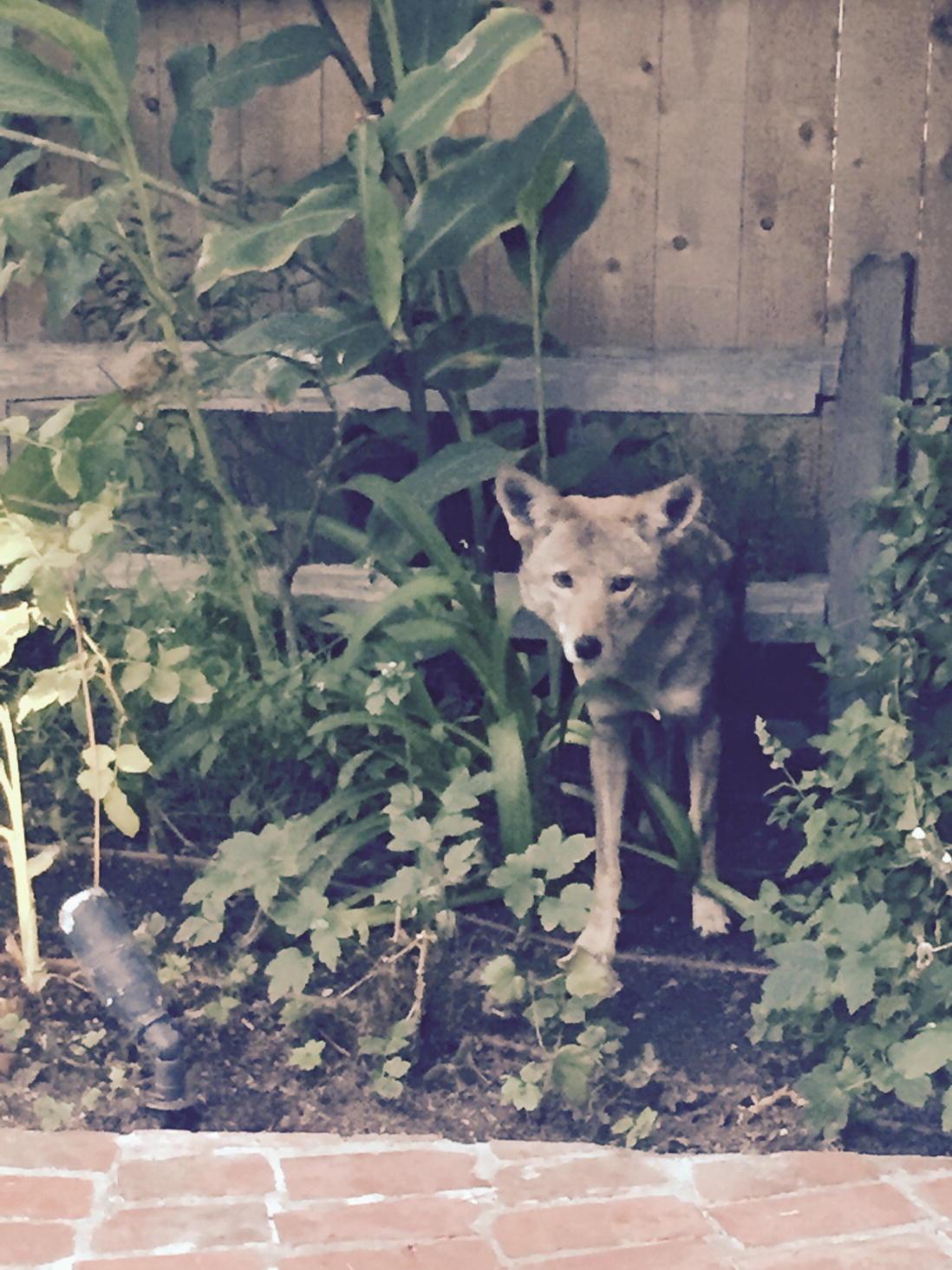 ANIMAL RESCUE TRANSPORT DOG CAT PAWS SHELTER PETS Black License Plate Frame NEW
