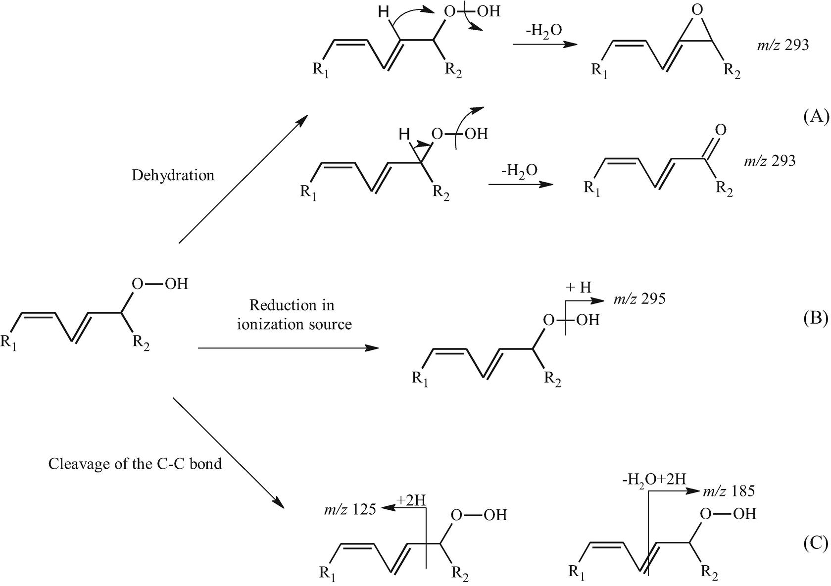 Characterization of Hydroxy and Hydroperoxy Polyunsaturated Fatty