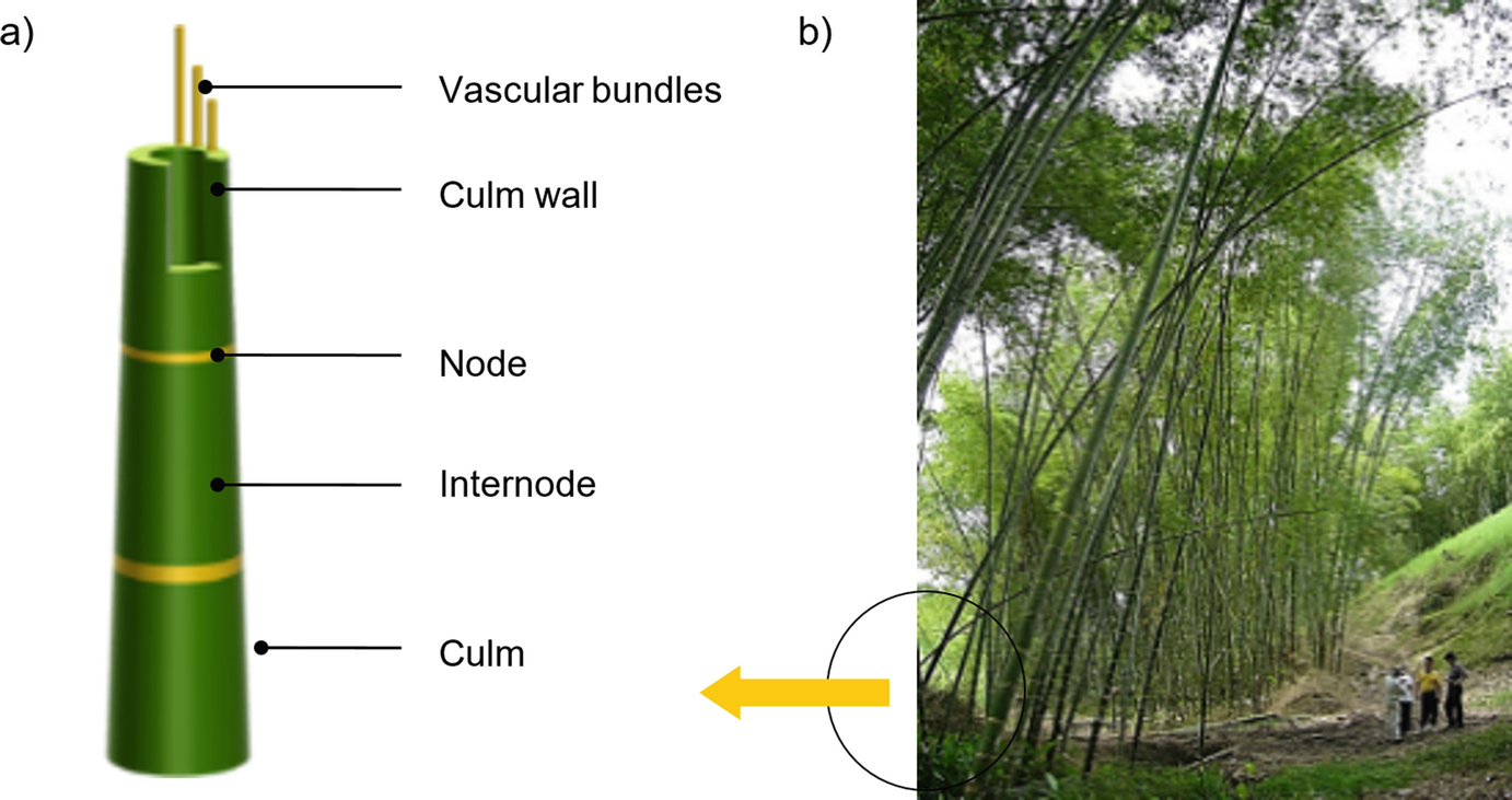 Bamboo: An Engineered Alternative for Buildings in the Global South