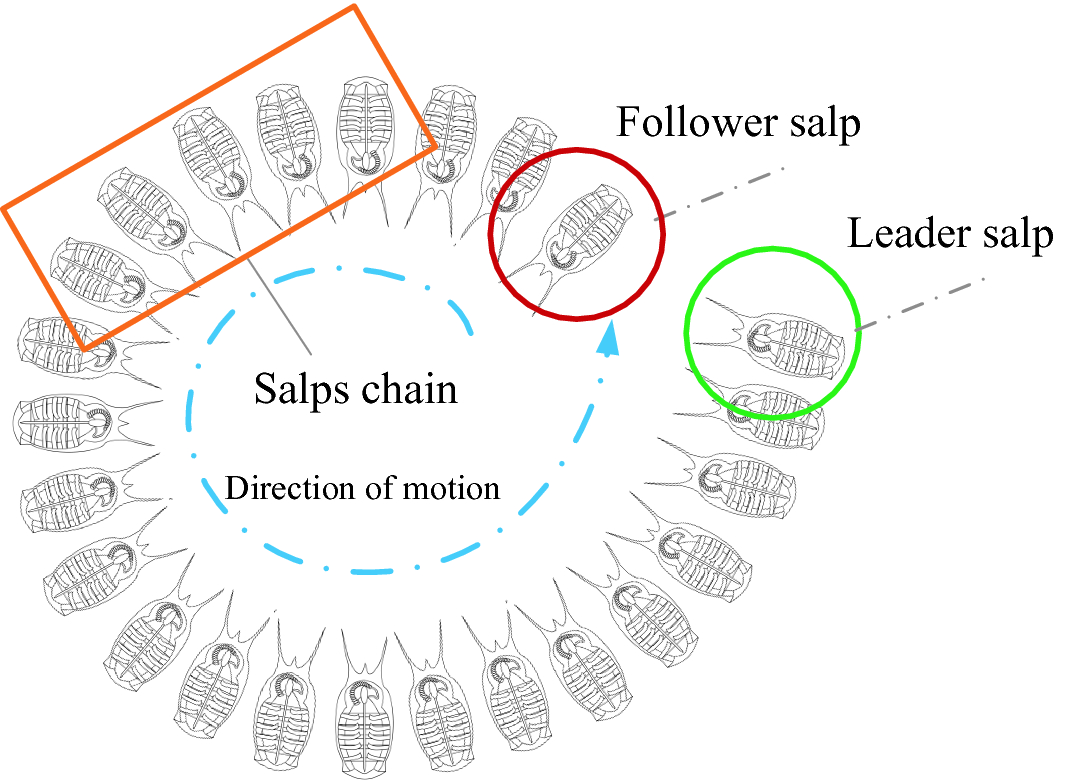 Salp Swarm Algorithm: Theory, Literature Review, and Application in