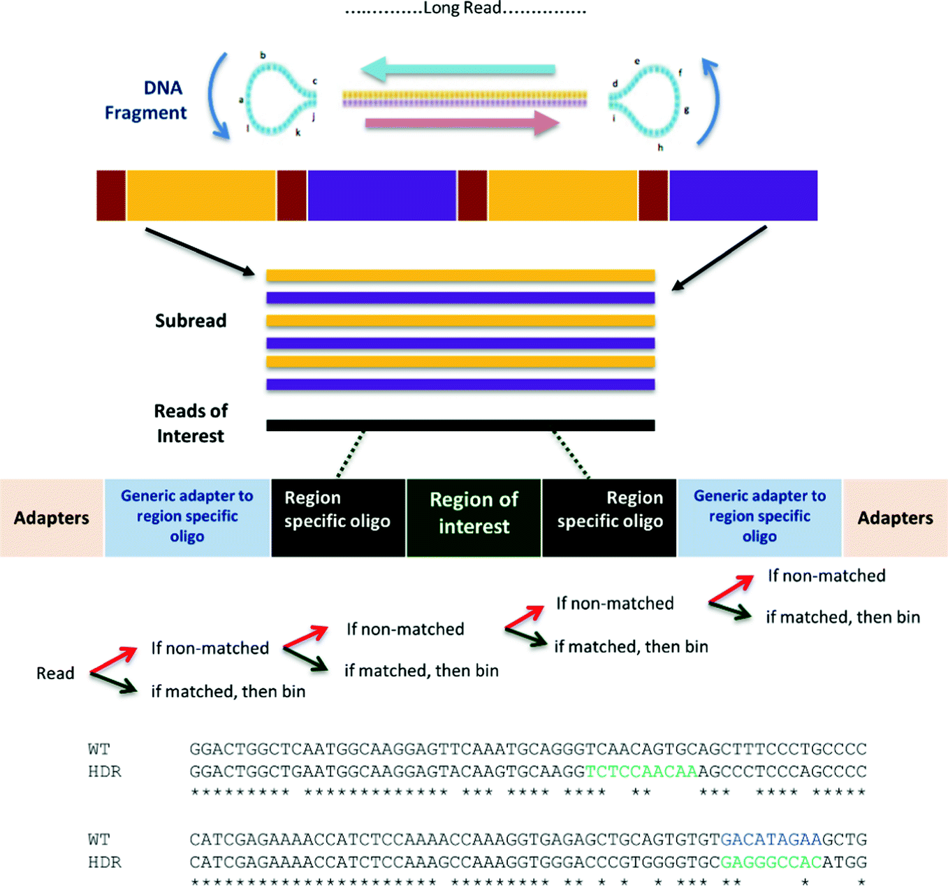 Bioinformatics Tools for PacBio Sequenced Amplicon Data Pre