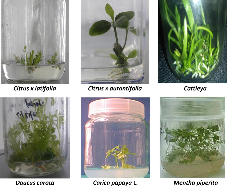 Nanotechnology and Plant Tissue Culture | SpringerLink