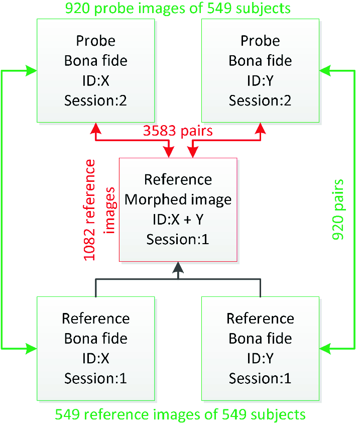 Detecting Face Morphing Attacks by Analyzing the Directed