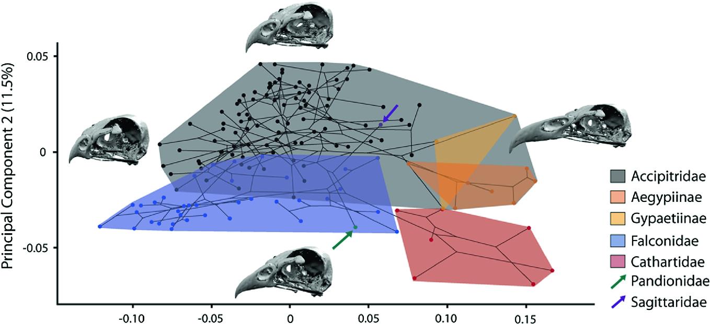 Feeding in Birds: Thriving in Terrestrial, Aquatic, and Aerial ...