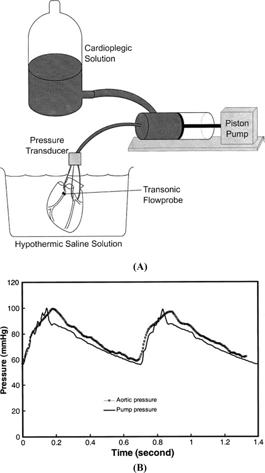 Network ysis of Coronary Circulation: II. Pulsatile Flow ... on