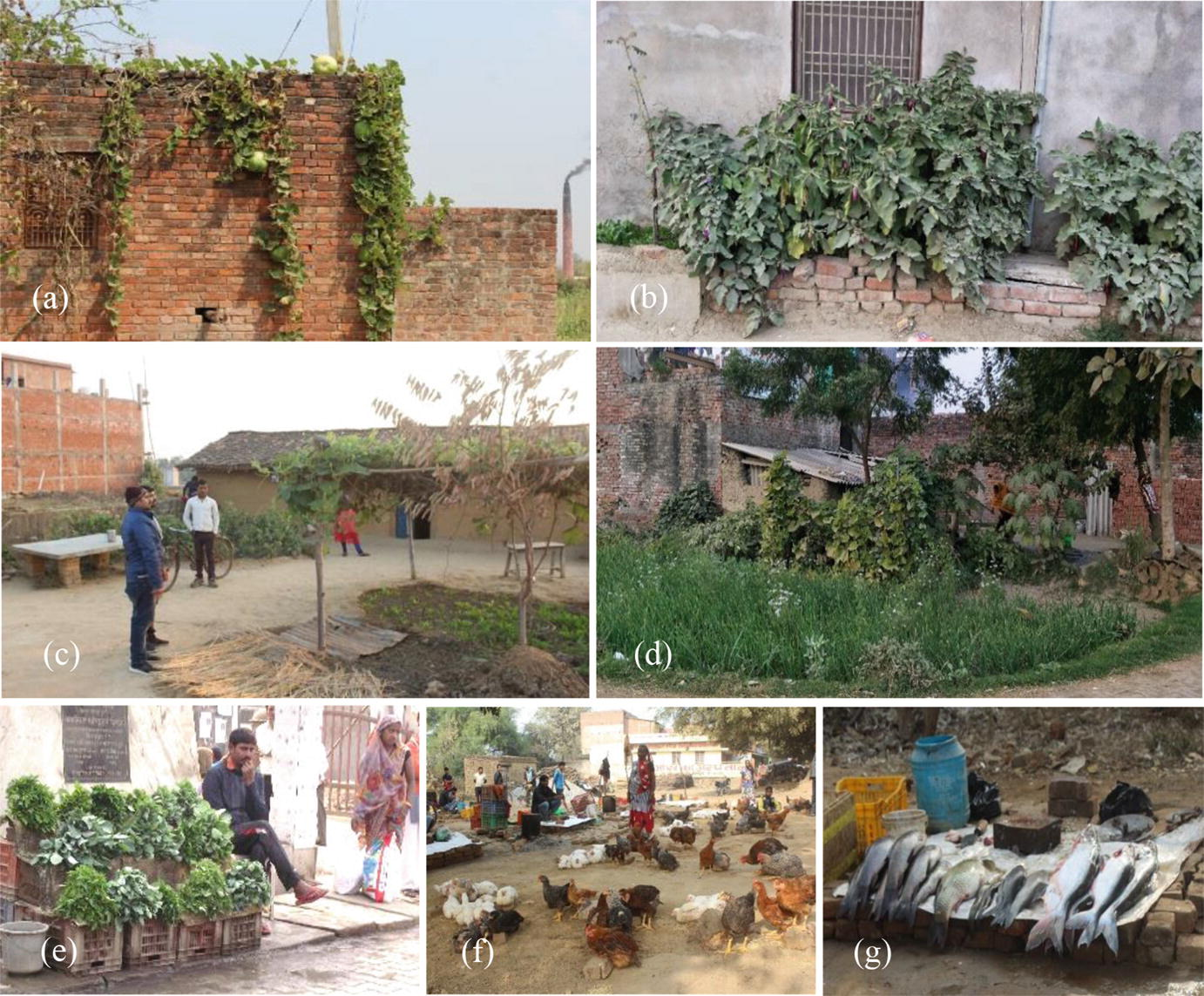 Adaptive Agricultural Practices Employed in Eastern Uttar